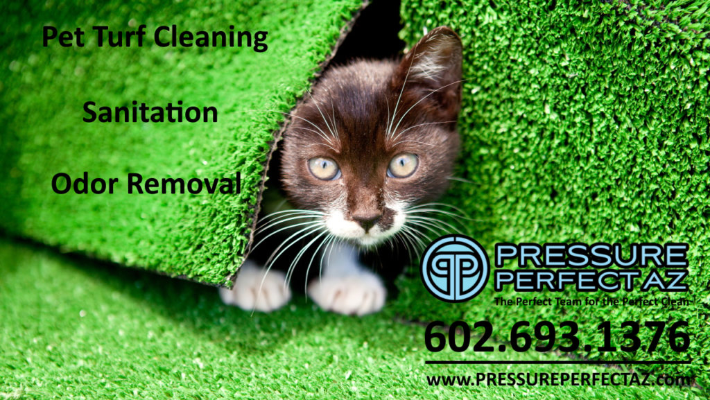 cat Litchfield Park, Goodyear, Avondale, Phoenix Arizona Pet turf cleaning pressure washing, sanitation and odor removal