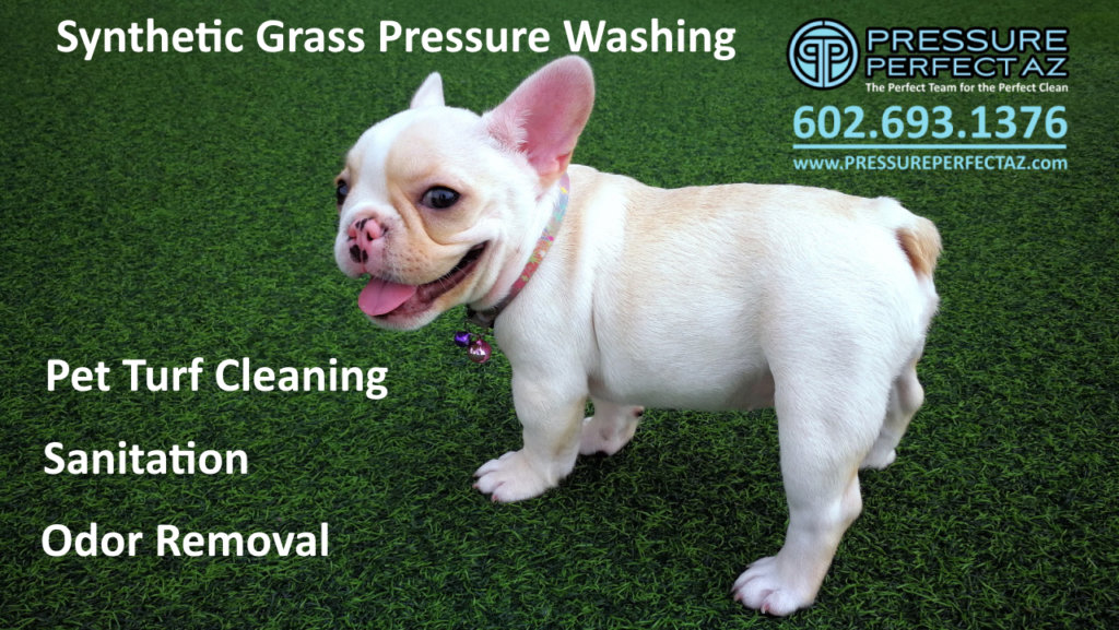 Phoenix Arizona Pet turf cleaning pressure washing, sanitation and odor removal in Phoenix, Avondale, Goodyear, Surprise, Buckeye, Sun City, Peoria, AZ,