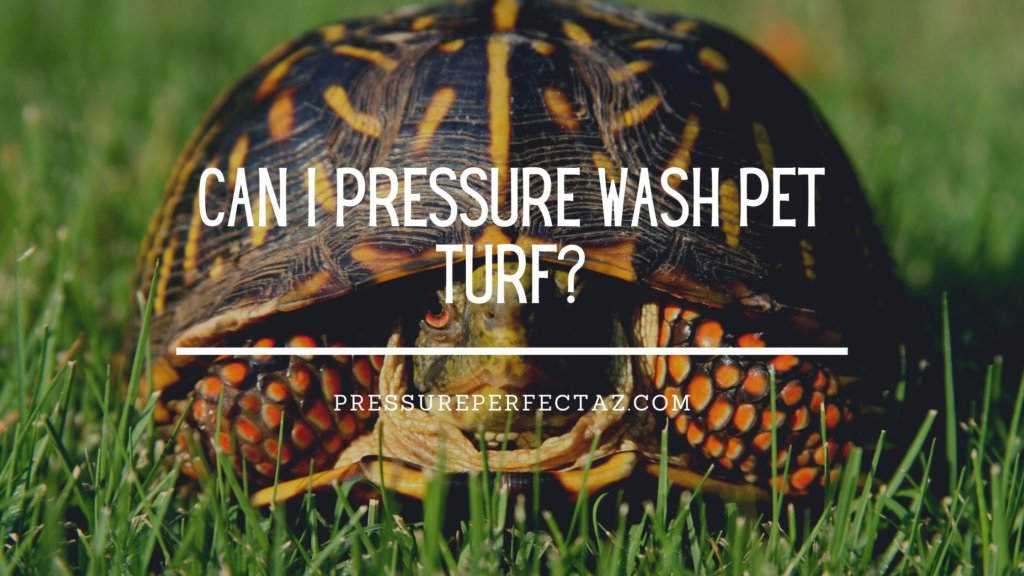 Can I Pressure Wash Pet Turf?
